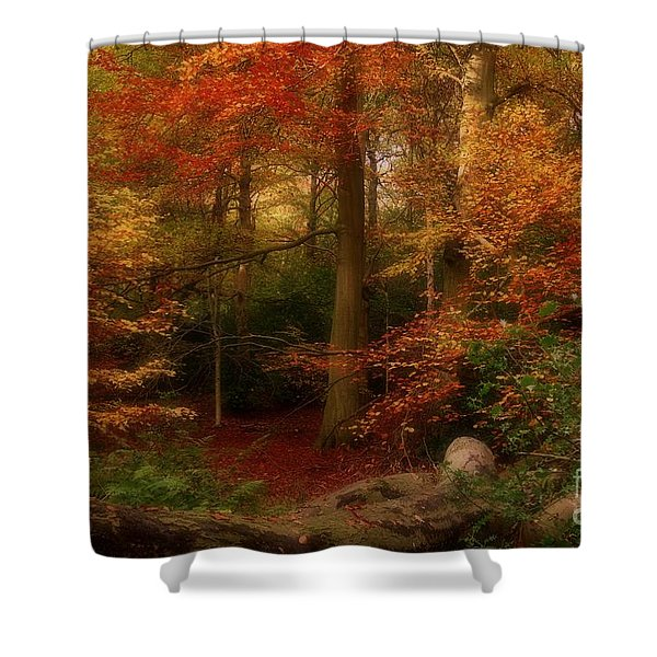 Dreamy Forest Glade In Fall Shower Curtain