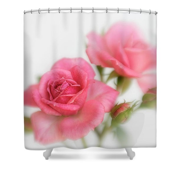 Dreamy Pink Roses Shower Curtain