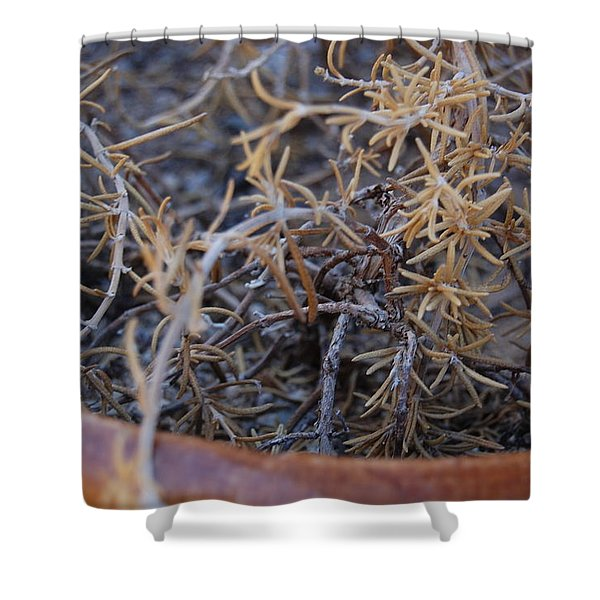 Dried Potted Plant 2 Shower Curtain