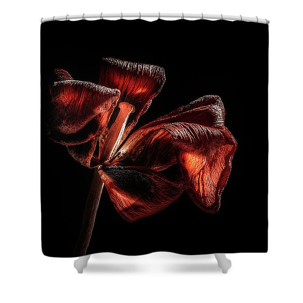 Dried Tulip Blossom Shower Curtain