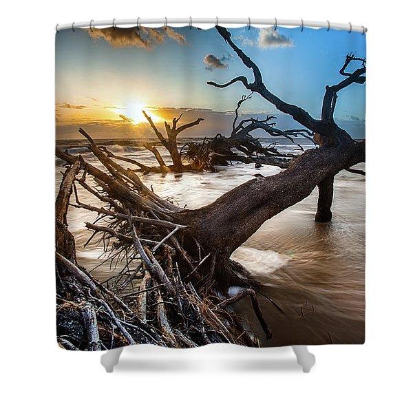 Driftwood Beach 7 Shower Curtain