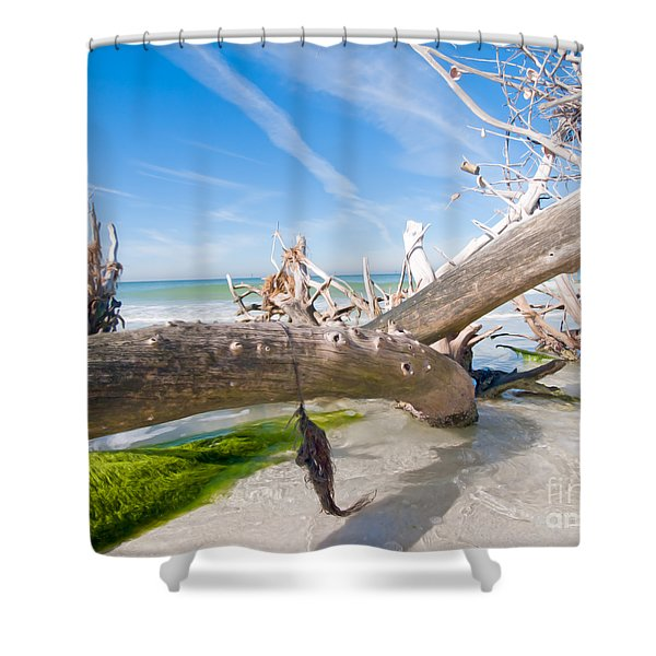 Driftwood C141352 Shower Curtain