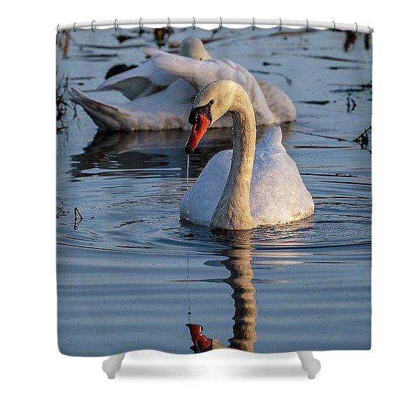 A Swan Shower Curtain
