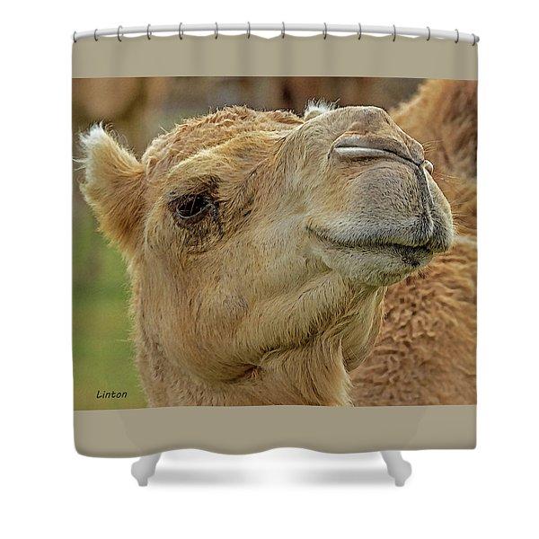 Dromedary Or Arabian Camel Shower Curtain
