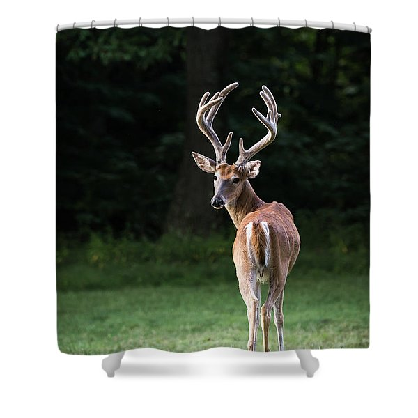 Shower Curtain featuring the photograph Dsc_0441 by Andrea Silies