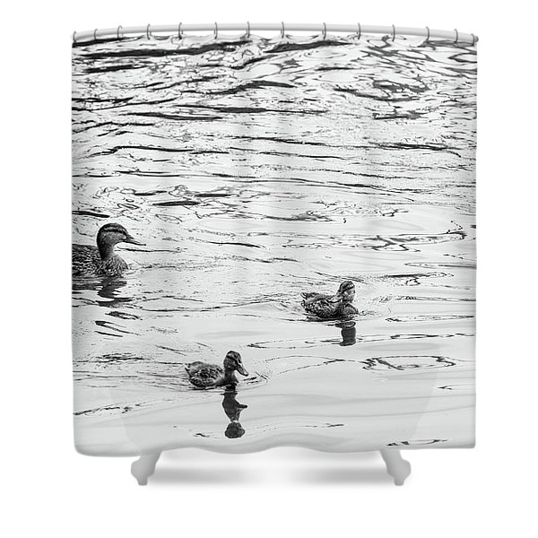 Duck And Ducklings Shower Curtain