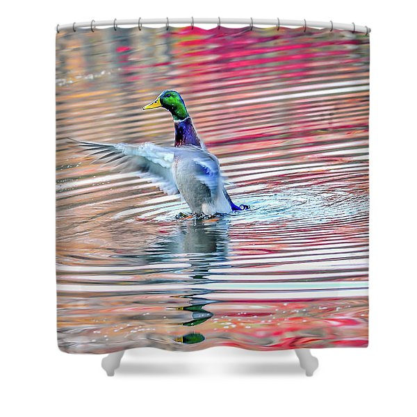 Duck On An Autumn Pond In The Chesapeake Bay Maryland Shower Curtain