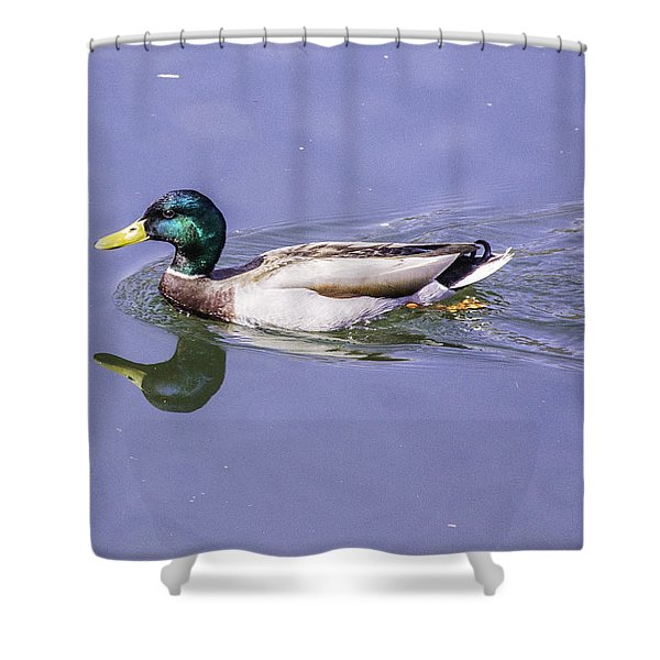 Duck On The Move Shower Curtain