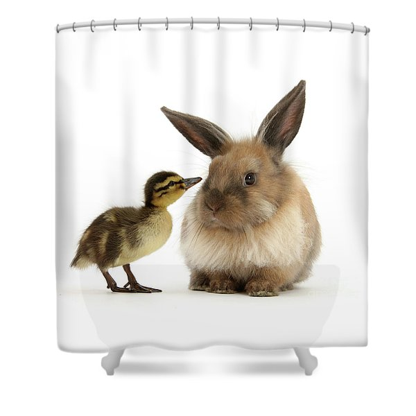 Duck Out Bunny Shower Curtain