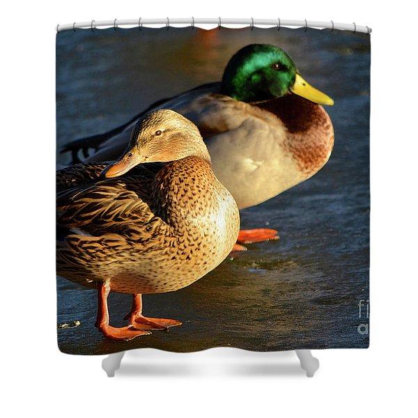 Duck Pair Sunbathing On Frozen Lake Shower Curtain