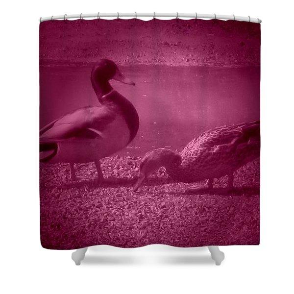 Ducks #1 Shower Curtain
