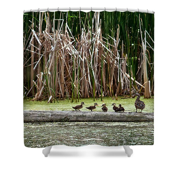 Ducks All In A Row Shower Curtain