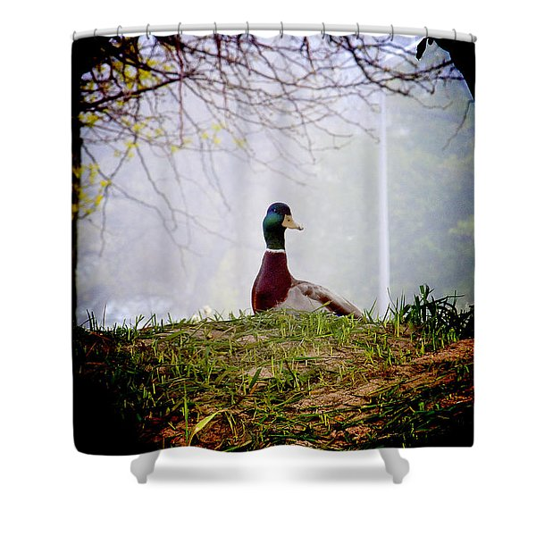 Duck's Story Shower Curtain
