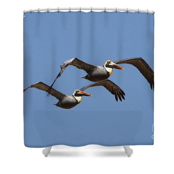 Duel Pelicans In Flight Shower Curtain
