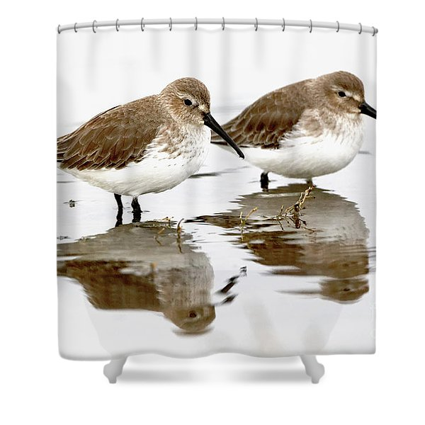 Dunlin Seeing Double Shower Curtain