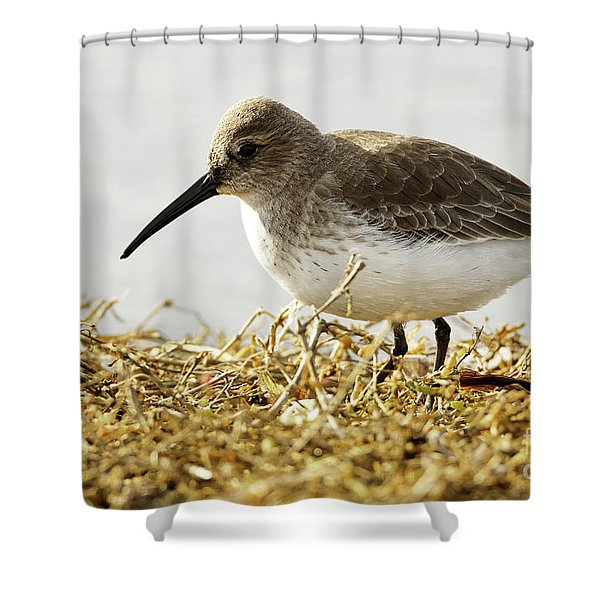 Dunlin In The Brown Grasses Shower Curtain
