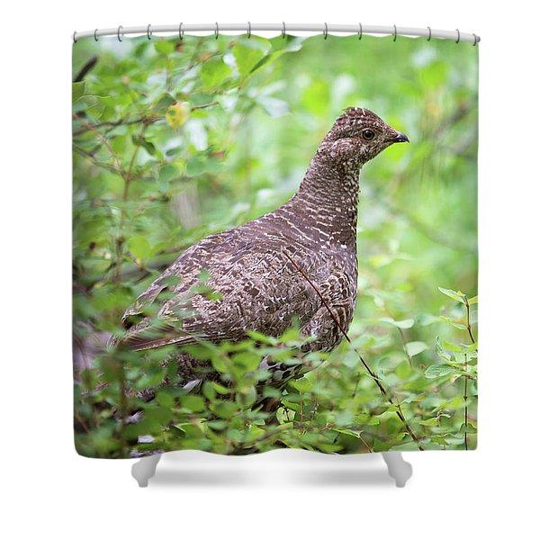 Dusky Grouse Shower Curtain