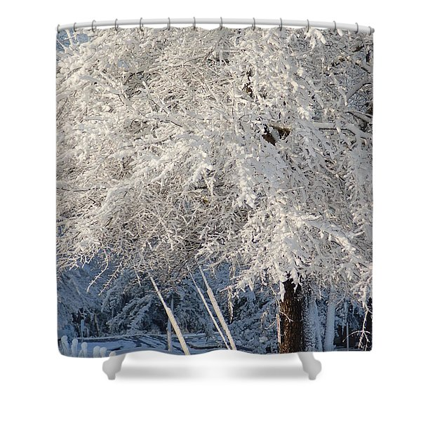Dusted With Powdered Sugar Shower Curtain