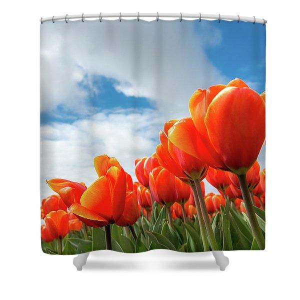 Dutch Tulips Near Keukenhof Shower Curtain