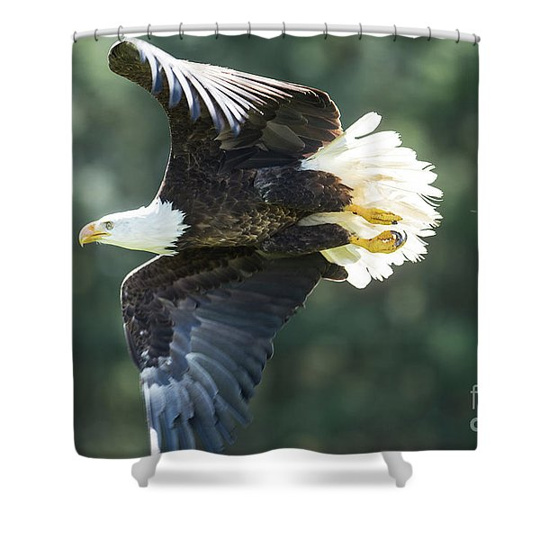Eagle Flying 3005 Shower Curtain