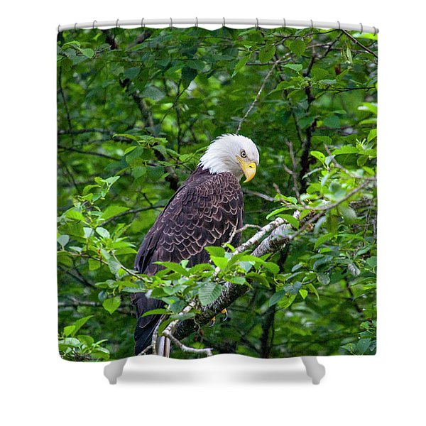 Eagle In The Tree Shower Curtain
