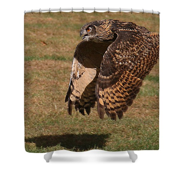 Eagle Owl On The Hunt 2 Shower Curtain