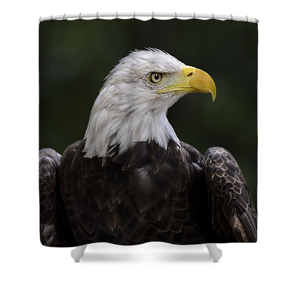 Shower Curtain featuring the photograph Eagle Profile 2 by Andrea Silies