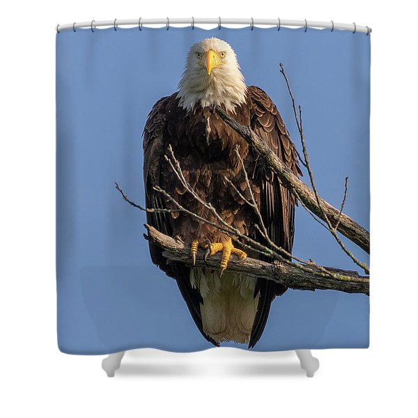 Eagle Stare Shower Curtain
