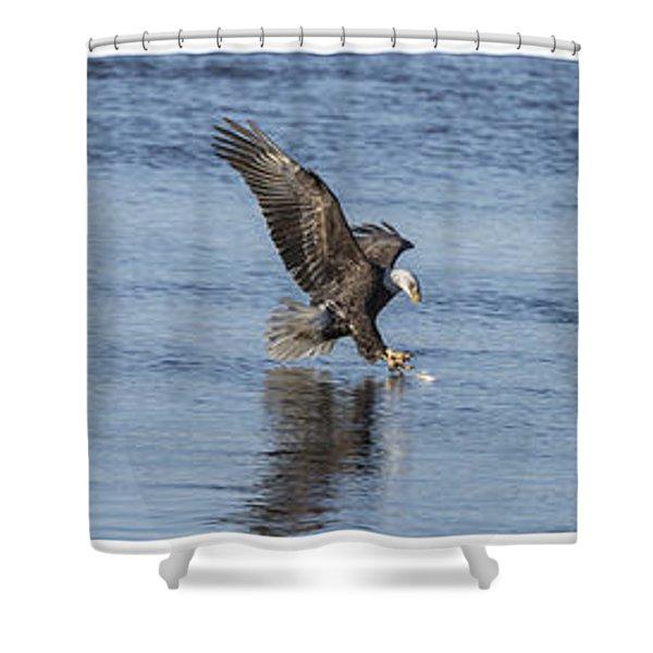 Eagle Triptych 2016-2 Shower Curtain