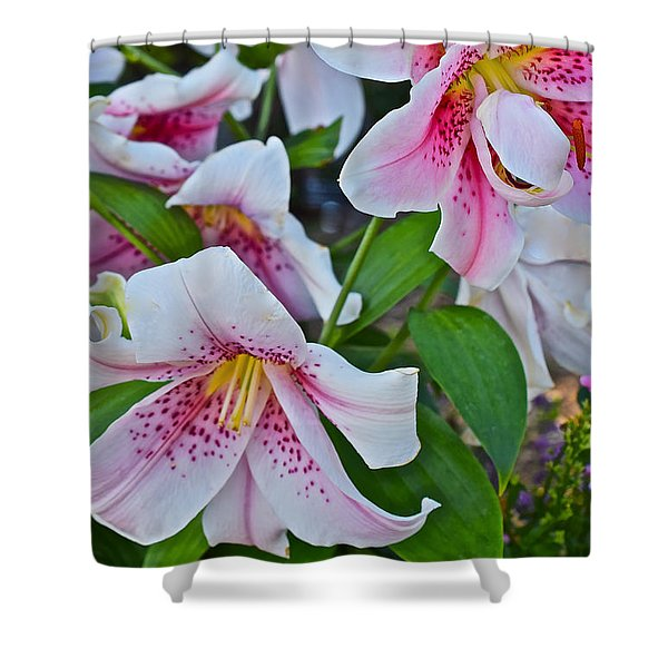 Early August Tumble Of Lilies Shower Curtain