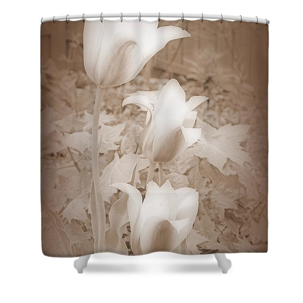 Early Blooming Tulips In Sepia Shower Curtain
