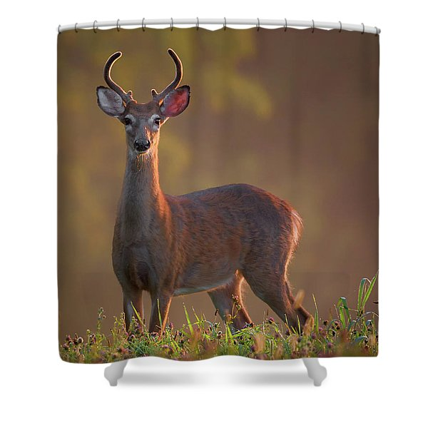 Early Buck Shower Curtain