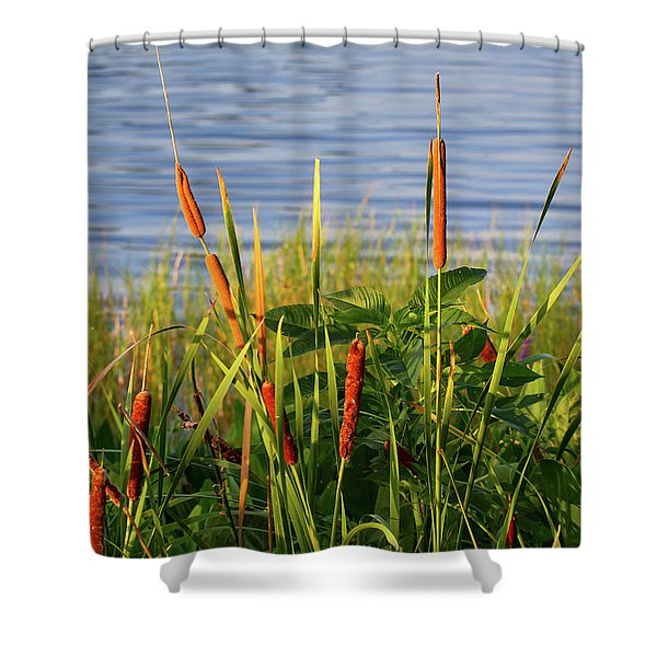 Early Morning Cattails Shower Curtain
