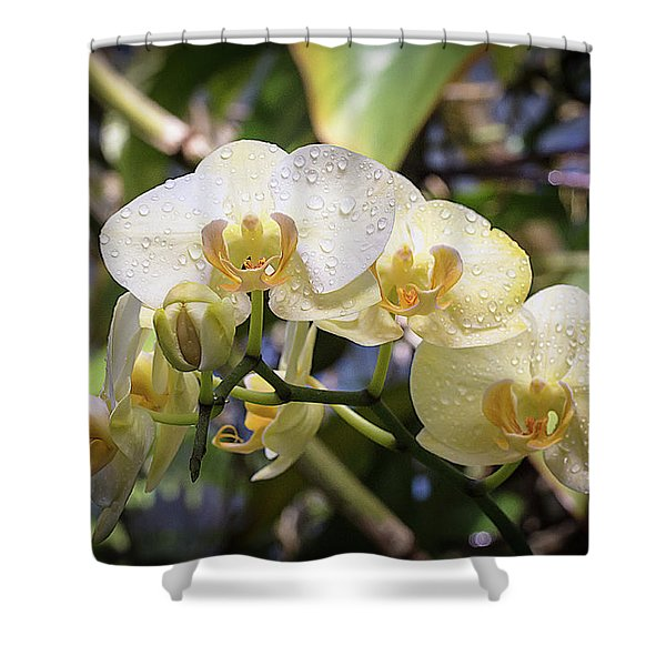 Early Morning Orchids Shower Curtain