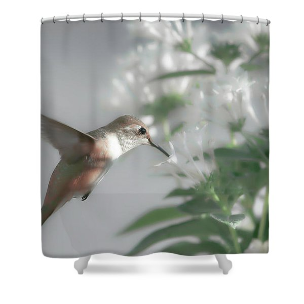 Early Morning Rufous Shower Curtain