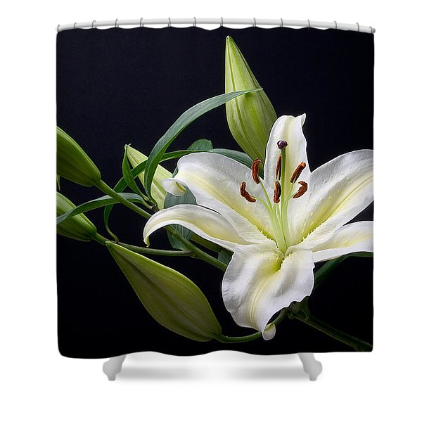 Easter Lily 3 Shower Curtain