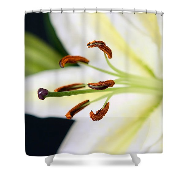 Easter Lily 4 Shower Curtain