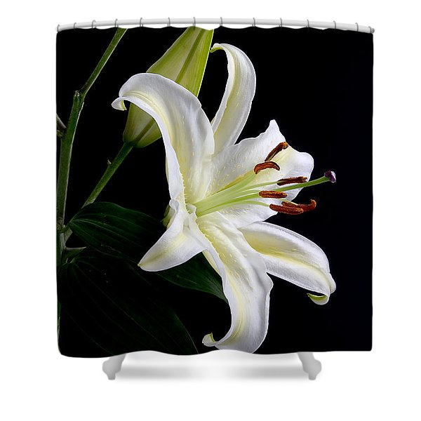 Easter Lily 5 Shower Curtain