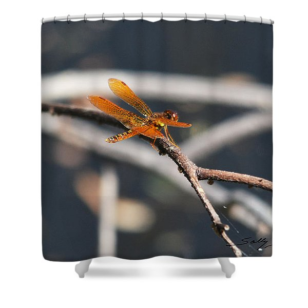Eastern Amberwing Shower Curtain