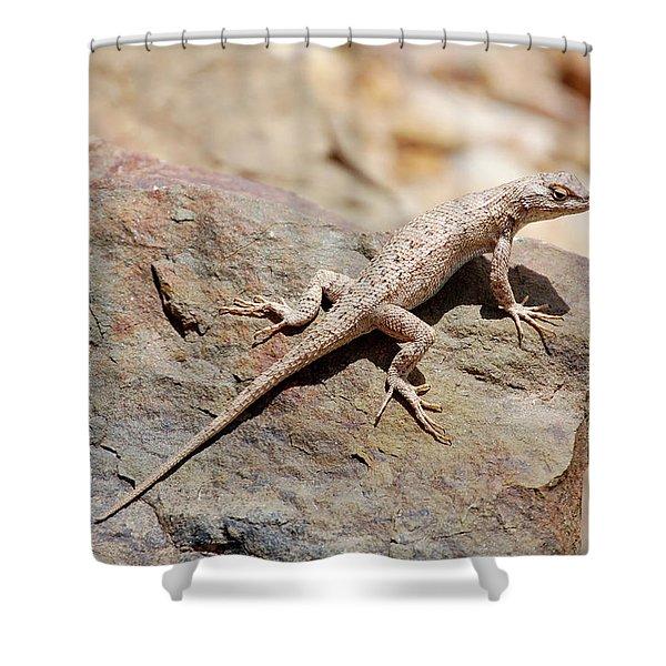 Eastern Fence Lizard, Sceloporus Undulatus Shower Curtain