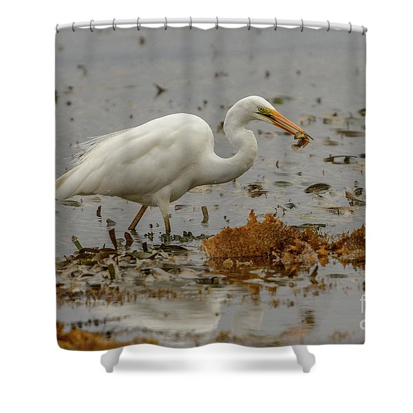 Eastern Great Egret 10 Shower Curtain