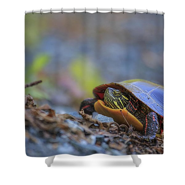 Eastern Painted Turtle Chrysemys Picta Shower Curtain