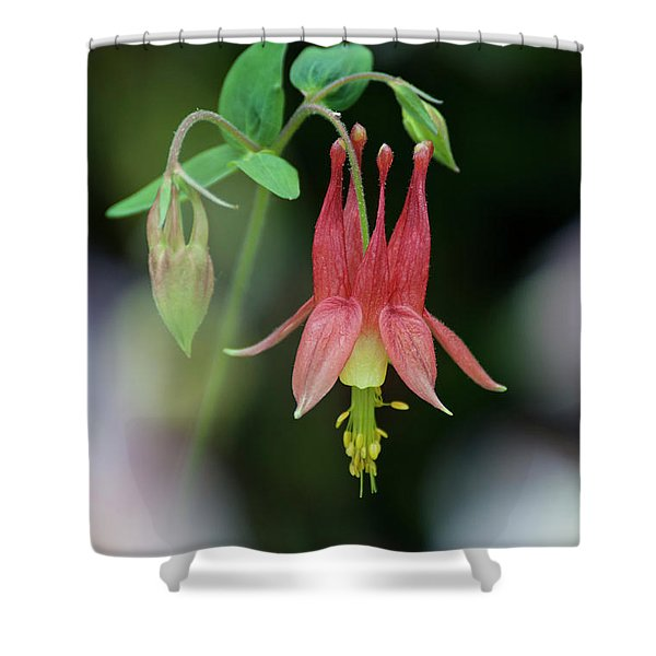 Eastern Red Columbine - D010104 Shower Curtain