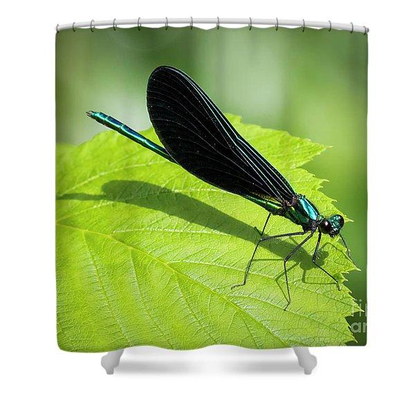 Ebony Jewelwing Shower Curtain