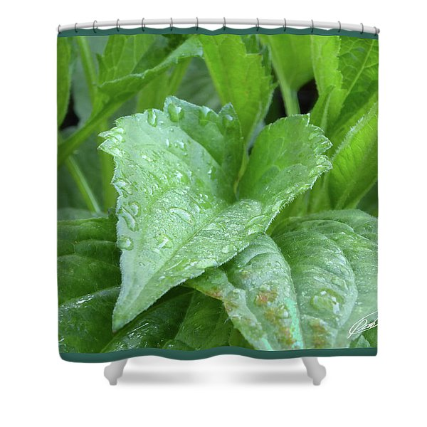 Echinacea After The Rain I Shower Curtain