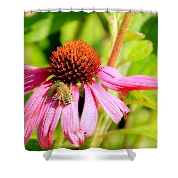 Echinacea Bee Shower Curtain