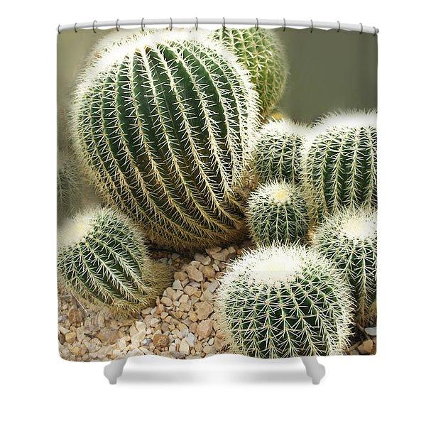 Echinocactus Grusonii  Shower Curtain