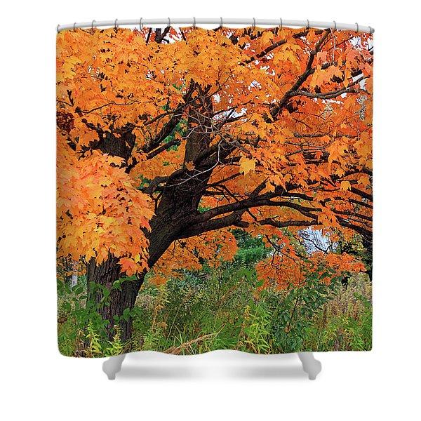 Edna's Tree Shower Curtain