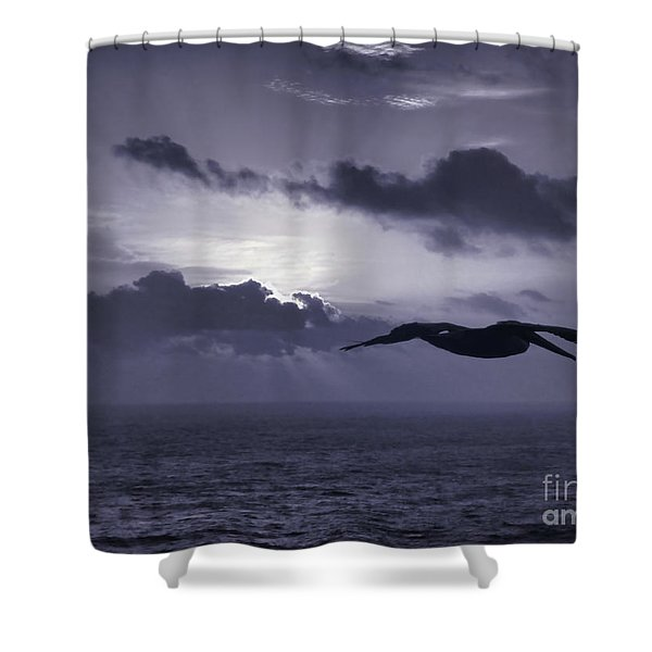 Pelican At Sunrise Shower Curtain