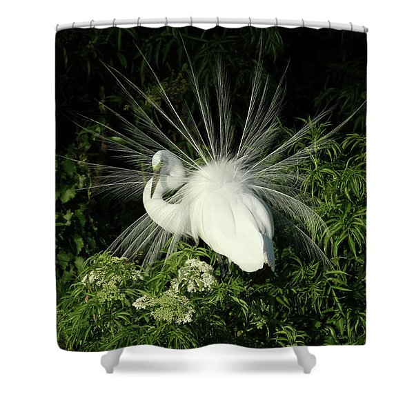 Egret Fan Dancer Shower Curtain